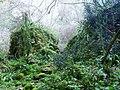 Foresta amazzonica in Val del Borago - panoramio.jpg