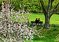 Frühling im Bad Mergentheimer Kurpark. 07.jpg
