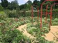 France Loir-et-Cher Festival jardins Chaumont-sur-Loire 2005 05 Les roses d autrefois 03.jpg