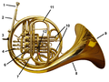 French horn back labelled.png