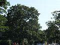 Friedhof-Lilienthalstraße-68.jpg