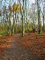 Friston Forest near Exceat - geograph.org.uk - 620967.jpg
