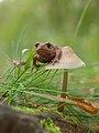 Frog on mushroom.jpg