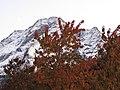 Fronde davanti al Pizzo - panoramio.jpg