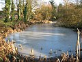 Frozen pond by the churchyard - geograph.org.uk - 1637746.jpg
