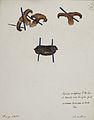 Fungi agaricus seriesI 054.jpg