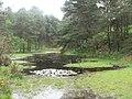 Furzebrook, the Little Pool - geograph.org.uk - 823183.jpg