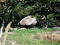 Głaz koło Naturbornholm - panoramio.jpg