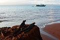 Galápagos Inseln, Ecuador (13898858222).jpg