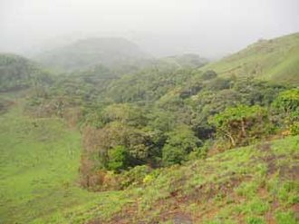 Paleotropical Kingdom - Gallery forest in Guinea