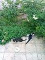 Gardens in Baghdad 78.jpg