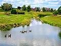 Geese - panoramio (6).jpg