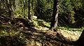 Gelobtbachtal, údolí Klopotského potoka - panoramio (5).jpg