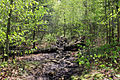 Gfp-new-york-adirondack-mountains-start-of-the-hikinh-trail.jpg