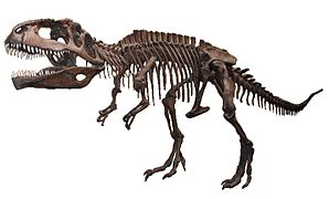 Giganotosaurus AustMus email white background.jpg
