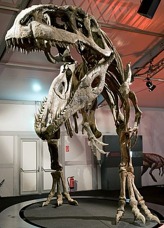 Giganotosaurus - Reconstructed skeleton, Naturmuseum Senckenberg