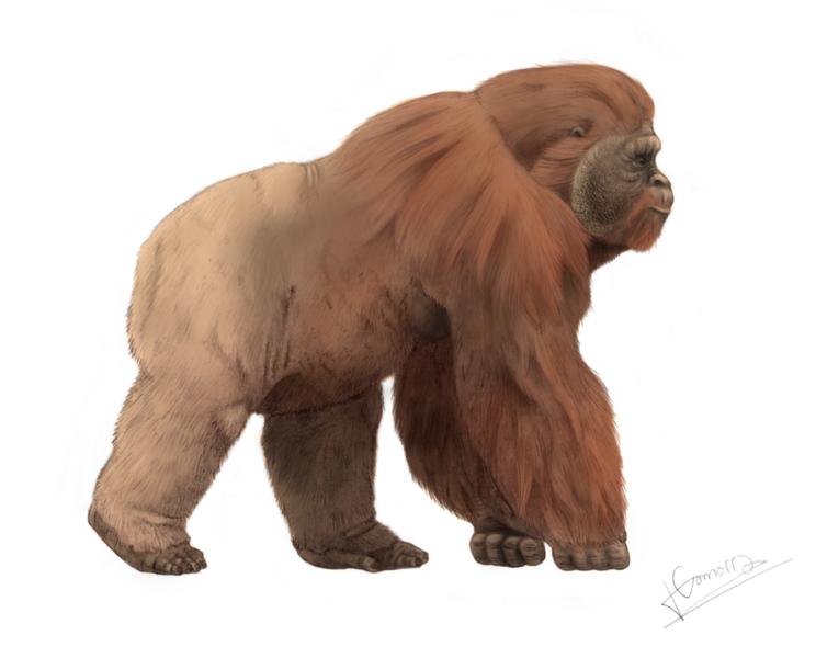 File:Gigantopithecus.png Description Español: Representación ideal del Gigantopithecus blackii