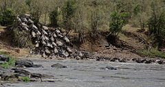 Gnus passing Mara River-03, by Fiver Löcker.jpg