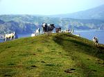 Kaproj en Batanes.png