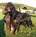 Gordon Setter 16.10.2011 4pl.jpg
