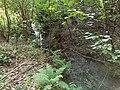 Graniczny Potok (dopływ Trzebinki), Góry Opawskie 2020.09.08 01.jpg