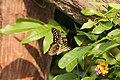 Graphium agamemnon (36084893521).jpg