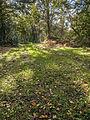 Grassy glade (8105231212).jpg