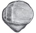 Gray353.png