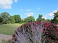 Green Spring Gardens in August (14917553871).jpg