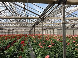 Greenhouse in Armenia 01.jpg