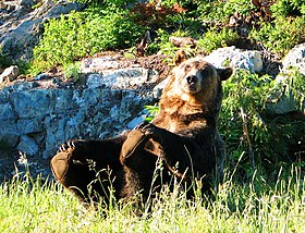 Grizzly - panoramio (1).jpg