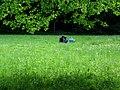 Großer Garten Dresden Wiese 1.jpg