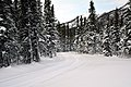 Groomed ski trails in the Riley Creek area (38719412662).jpg