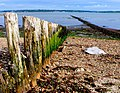 Groynes at Lepe - geograph.org.uk - 1350924.jpg