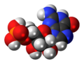 Guanosine-monophosphate-3D-spacefill.png