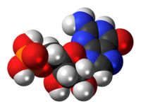 Space-filling model of guanosine monophosphate