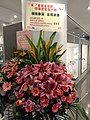 HKCL CWB 香港中央圖書館 Hong Kong Central Library 展覽廳 Exhibition Gallery flowers sign Chinese calligraphy art NOV 2020 SS2 44.jpg