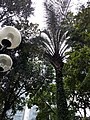 HK 中環 Central 遮打花園 Chater Garden flora green leaves n trees March 2020 SS2 52.jpg