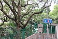 HK 香港 半山區 Mid-levels 列堤頓道 Lyttelton Road 屋蘭士里 Oaklands Path West End Park trees Oaklands Path n MTR sign April 2017 IX1.jpg