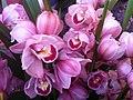 HK CWB 維園年宵市場 Victoria Park Fair - flowers pink Jan-2012 Ip4.jpg