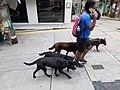 HK SW 上環 Sheung Wan 太平山街 Tai Ping Shan Street dog walking March 2020 SS2 02.jpg