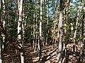 Hambach forest 60.jpg