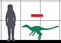 Haplocheirus SIZE 01.jpg
