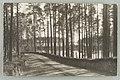 Harjutie, Punkasalmi, Äijönlahti, Th. Sunell 1930s PK0294.jpg