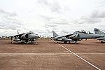 Harriers (5100492798).jpg