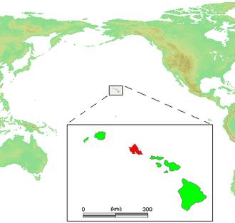 Achatinella decora - Image: Hawaii Islands Oahu