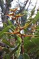 Hawaii Lava Tree State Park SAC15.JPG