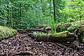 Heilbach im Bienwald trocken.jpg