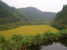Hengshitan-roadside-pond-and-rice-field-9945.jpg