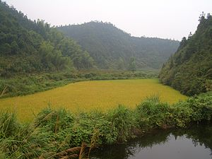 Tongshan County - Rice fields near Hengshitan